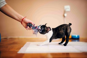 4 Fun Training Games You Should Play With Your Dog